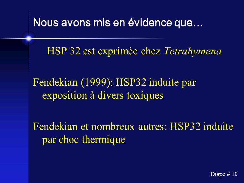 Diapo # 10 Nous avons mis en évidence que… HSP 32 est exprimée chez Tetrahymena Fendekian (1999): HSP32 induite par exposition à divers toxiques Fende