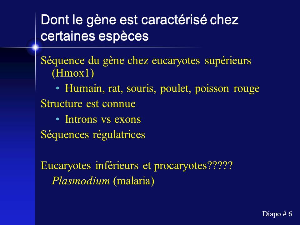 Diapo # 6 Dont le gène est caractérisé chez certaines espèces Séquence du gène chez eucaryotes supérieurs (Hmox1) Humain, rat, souris, poulet, poisson