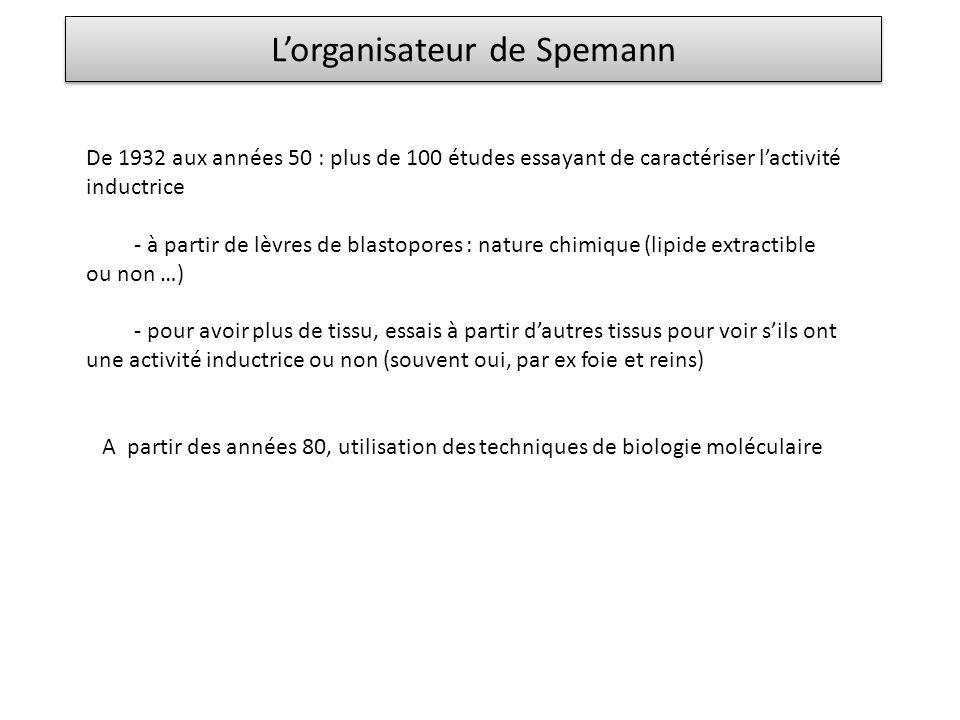 Lorganisateur de Spemann De 1932 aux années 50 : plus de 100 études essayant de caractériser lactivité inductrice - à partir de lèvres de blastopores
