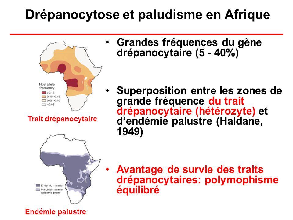 Drépanocytose et paludisme en Afrique Grandes fréquences du gène drépanocytaire (5 - 40%) Superposition entre les zones de grande fréquence du trait d