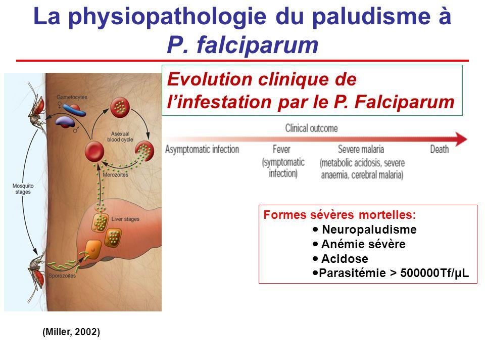 La physiopathologie du paludisme à P. falciparum Evolution clinique de linfestation par le P. Falciparum (Miller, 2002) Formes sévères mortelles: Neur