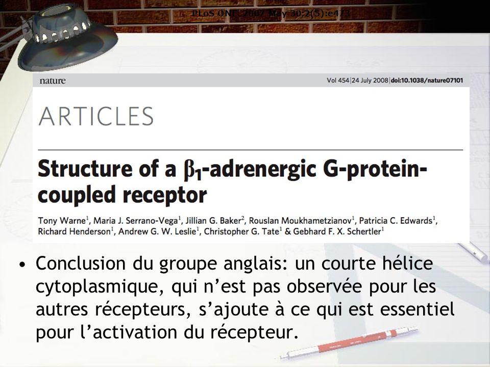 Conclusion du groupe anglais: un courte hélice cytoplasmique, qui nest pas observée pour les autres récepteurs, sajoute à ce qui est essentiel pour lactivation du récepteur.