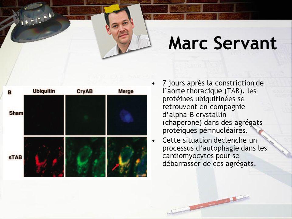 Marc Servant 7 jours après la constriction de laorte thoracique (TAB), les protéines ubiquitinées se retrouvent en compagnie dalpha-B crystallin (chaperone) dans des agrégats protéiques périnucléaires.