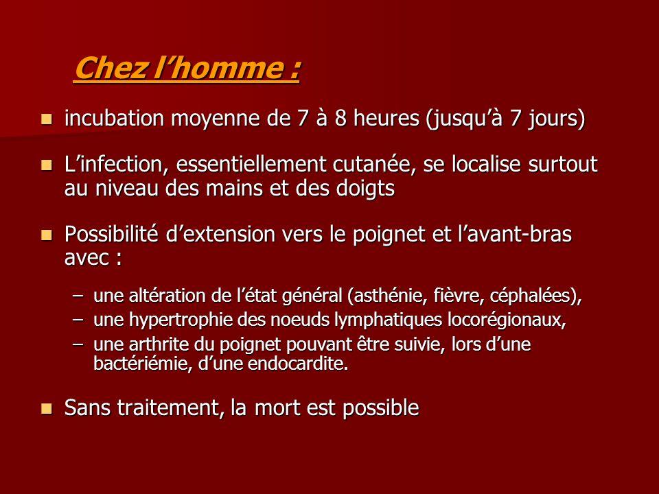 Chez lhomme : incubation moyenne de 7 à 8 heures (jusquà 7 jours) incubation moyenne de 7 à 8 heures (jusquà 7 jours) Linfection, essentiellement cuta