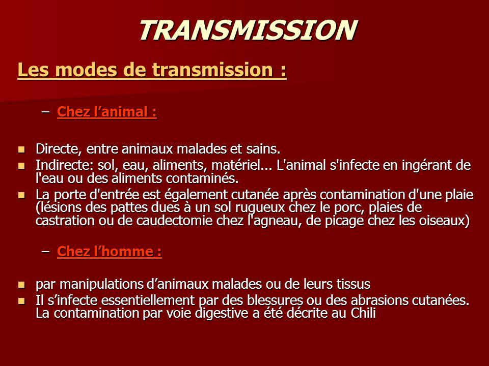 TRANSMISSION Les modes de transmission : –Chez lanimal : Directe, entre animaux malades et sains. Directe, entre animaux malades et sains. Indirecte: