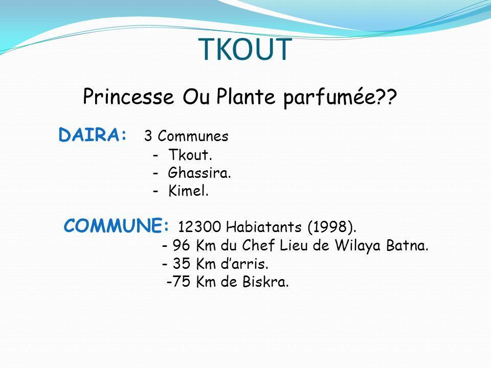 TKOUT Princesse Ou Plante parfumée?? DAIRA: 3 Communes - Tkout. - Ghassira. - Kimel. COMMUNE: 12300 Habiatants (1998). - 96 Km du Chef Lieu de Wilaya