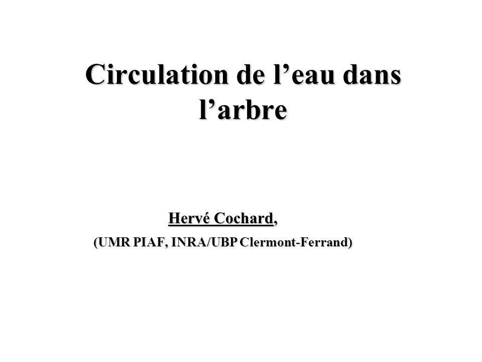 Circulation de leau dans larbre Hervé Cochard, (UMR PIAF, INRA/UBP Clermont-Ferrand)