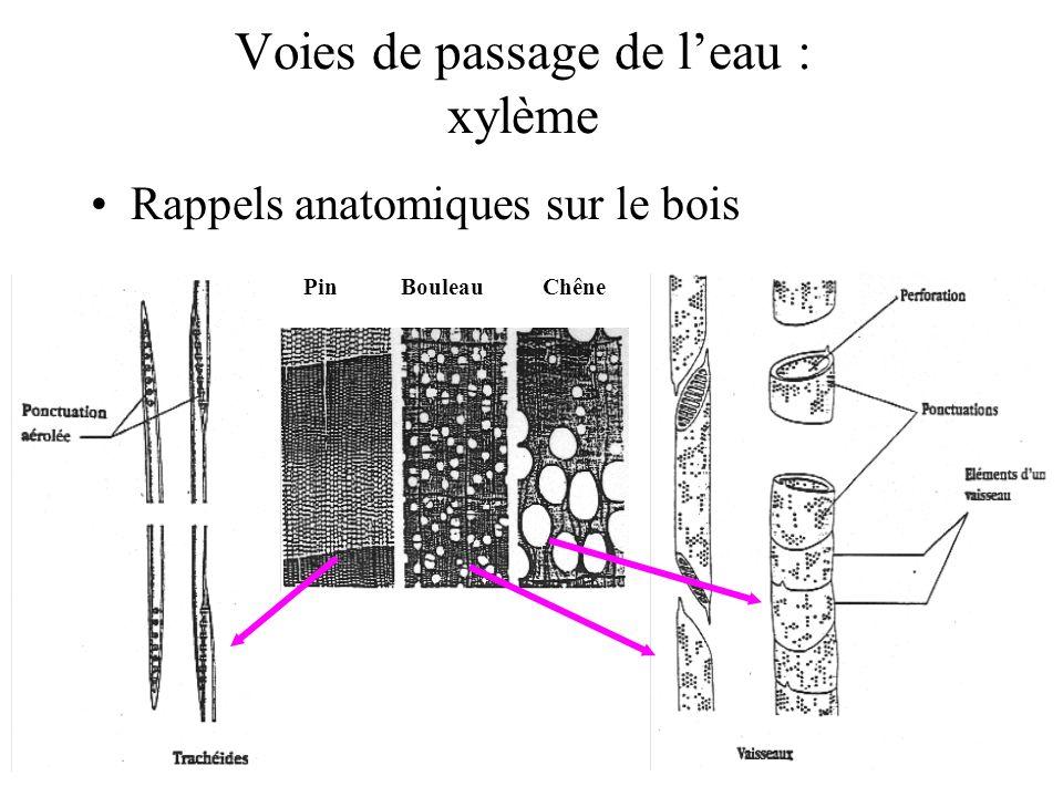 Voies de passage de leau : xylème Rappels anatomiques sur le bois PinBouleauChêne