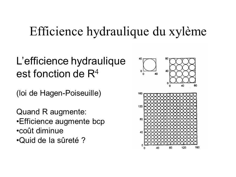 Efficience hydraulique du xylème Lefficience hydraulique est fonction de R 4 (loi de Hagen-Poiseuille) Quand R augmente: Efficience augmente bcp coût diminue Quid de la sûreté ?