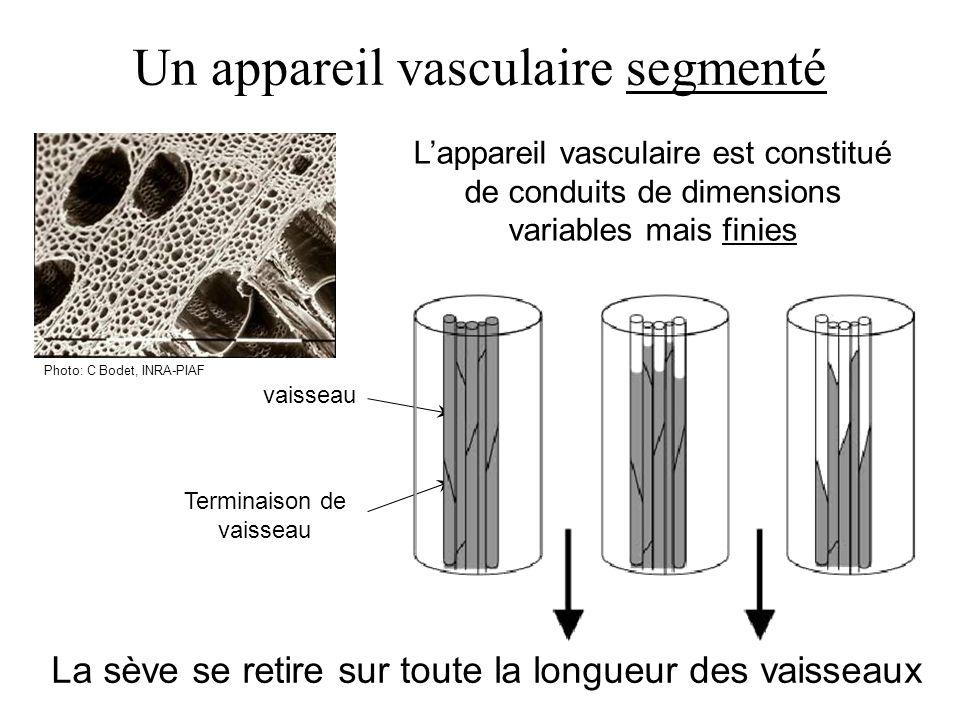 Un appareil vasculaire segmenté Photo: C Bodet, INRA-PIAF Lappareil vasculaire est constitué de conduits de dimensions variables mais finies vaisseau Terminaison de vaisseau La sève se retire sur toute la longueur des vaisseaux
