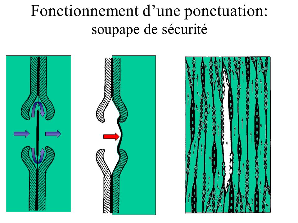 Fonctionnement dune ponctuation: soupape de sécurité