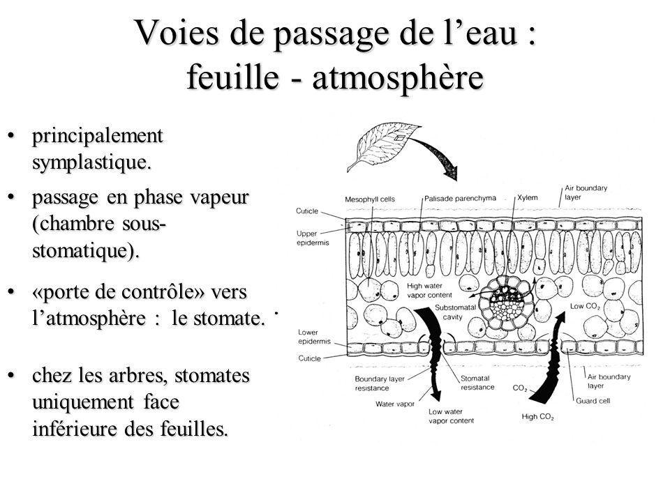 Voies de passage de leau : feuille - atmosphère principalement symplastique.principalement symplastique.