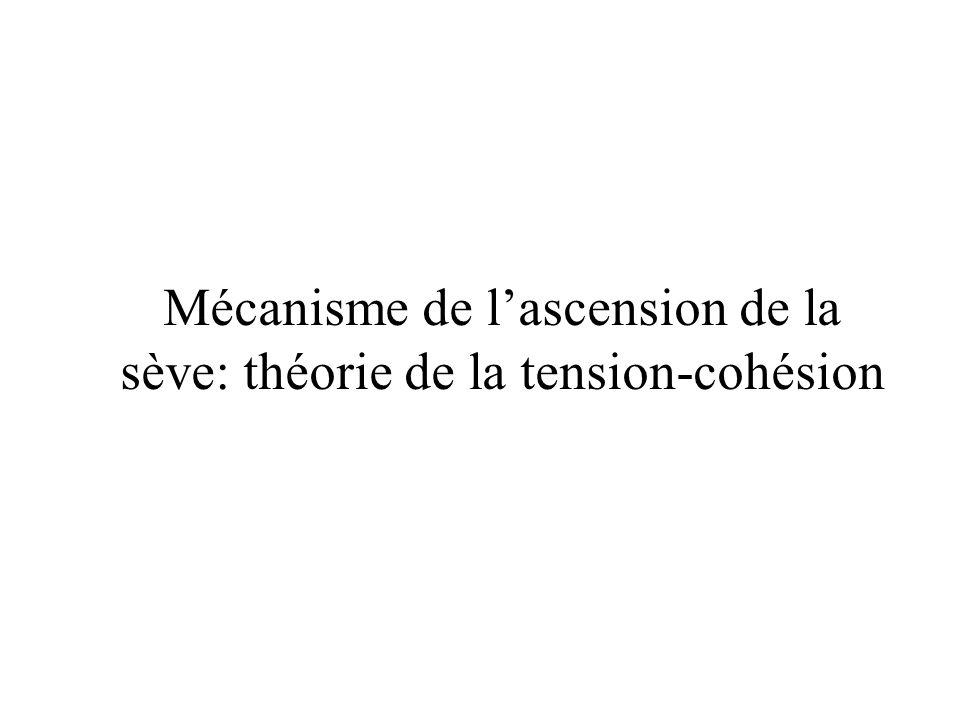 Mécanisme de lascension de la sève: théorie de la tension-cohésion