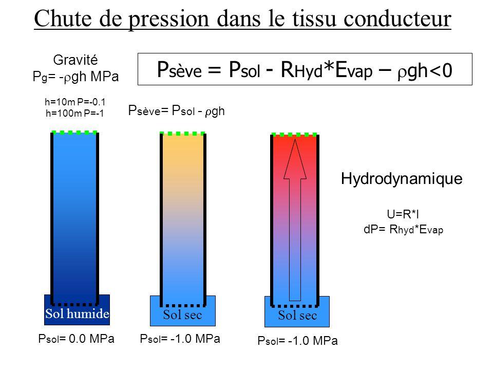 P sève = P sol - R Hyd *E vap – gh<0 P sol = 0.0 MPa Gravité P g = - gh MPa h=10m P=-0.1 h=100m P=-1 Sol humide P sol = -1.0 MPa P sève = P sol - gh Sol sec Chute de pression dans le tissu conducteur P sol = -1.0 MPa Sol sec U=R*I dP= R hyd *E vap Hydrodynamique