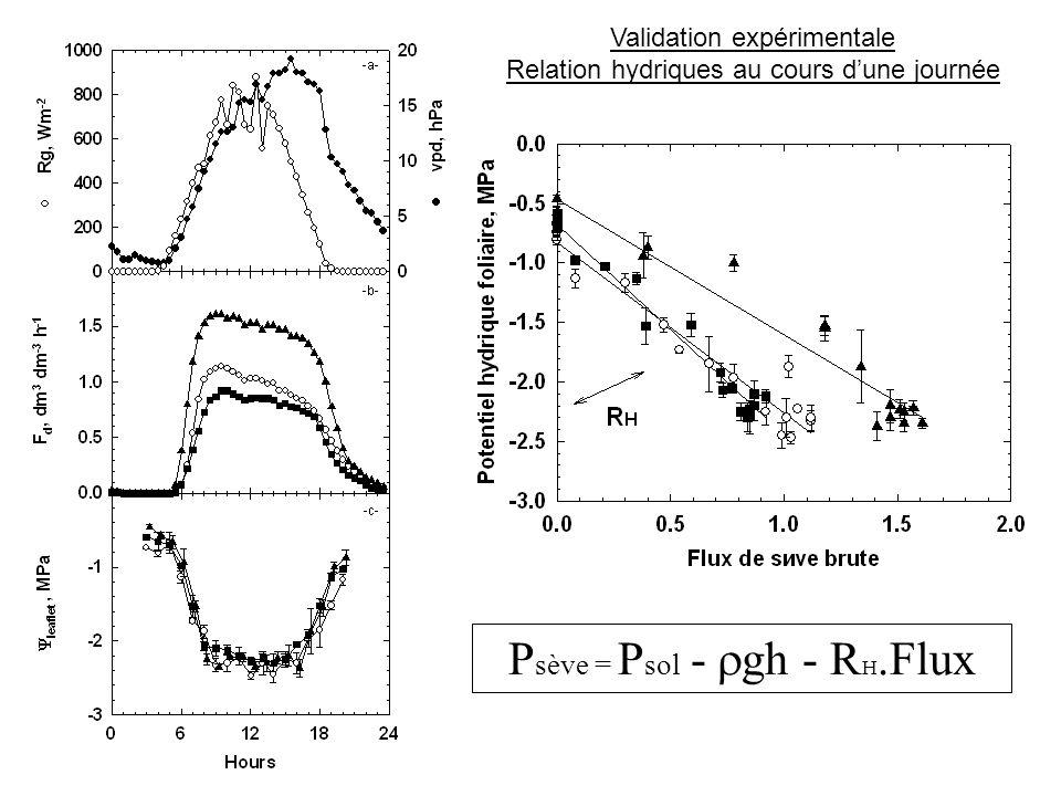 P sève = P sol - gh - R H.Flux Validation expérimentale Relation hydriques au cours dune journée