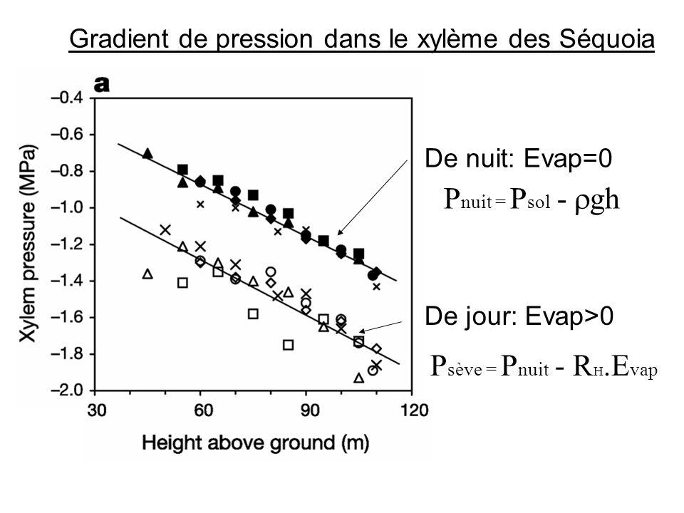 De nuit: Evap=0 P nuit = P sol - gh De jour: Evap>0 P sève = P nuit - R H.E vap Gradient de pression dans le xylème des Séquoia