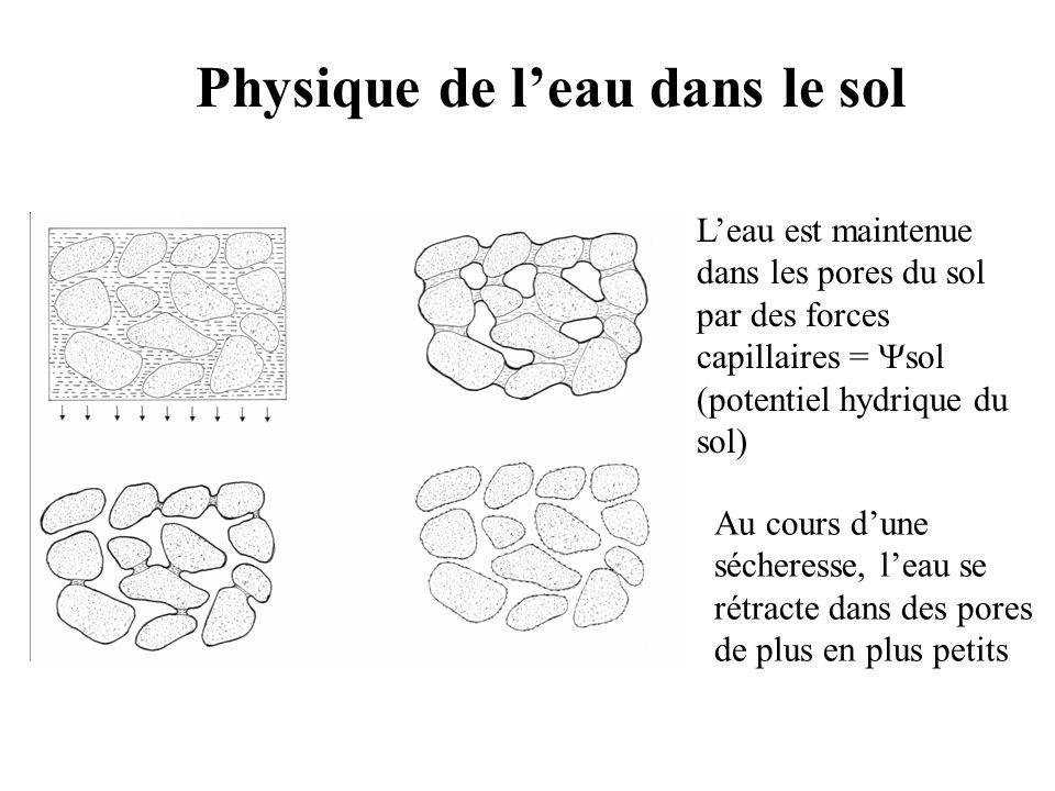 Physique de leau dans le sol Leau est maintenue dans les pores du sol par des forces capillaires = sol (potentiel hydrique du sol) Au cours dune sécheresse, leau se rétracte dans des pores de plus en plus petits