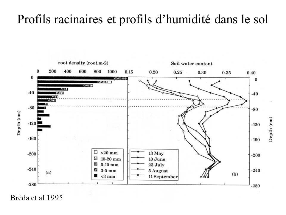 Profils racinaires et profils dhumidité dans le sol Bréda et al 1995