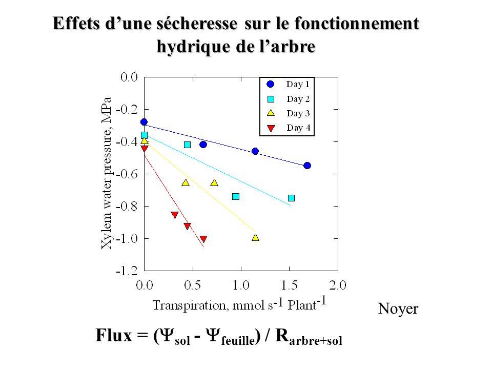 Effets dune sécheresse sur le fonctionnement hydrique de larbre Flux = ( sol - feuille ) / R arbre+sol Noyer