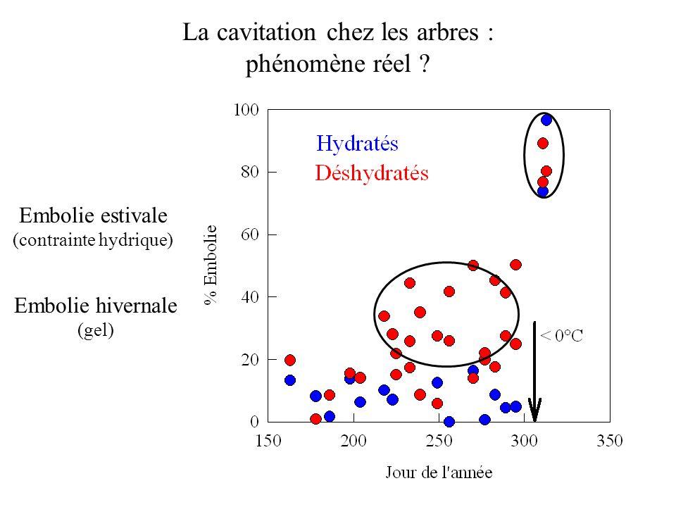 Embolie estivale (contrainte hydrique) Embolie hivernale (gel) La cavitation chez les arbres : phénomène réel ?
