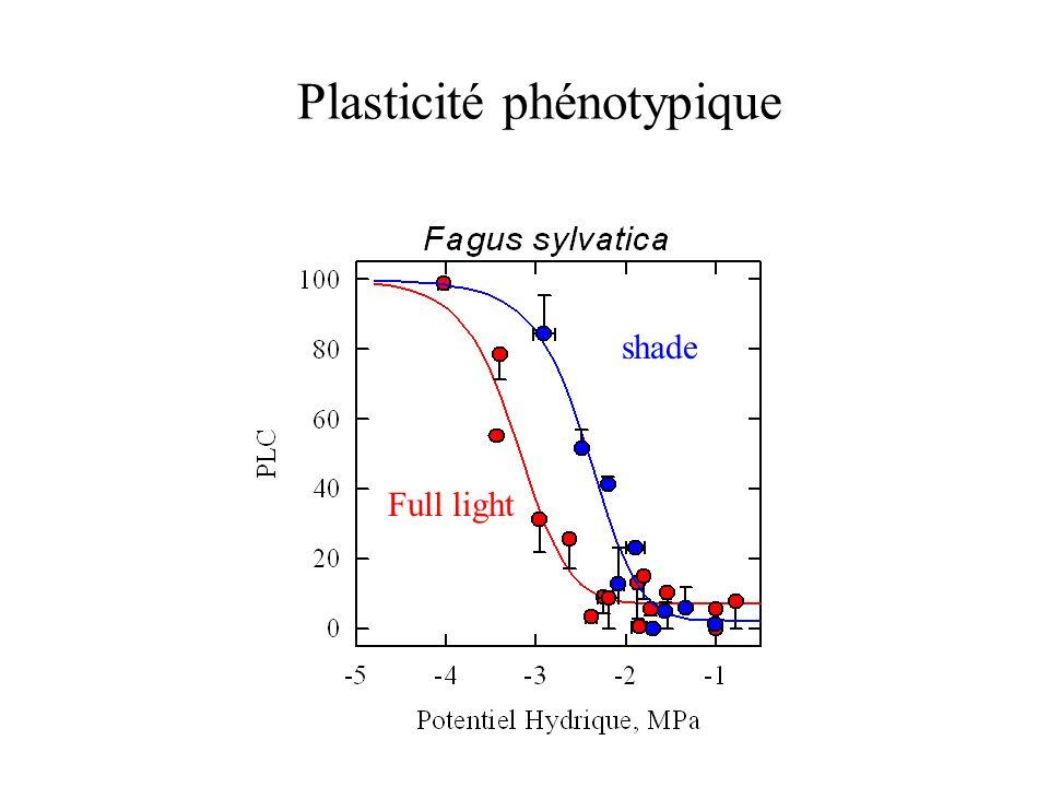 Plasticité phénotypique shade Full light