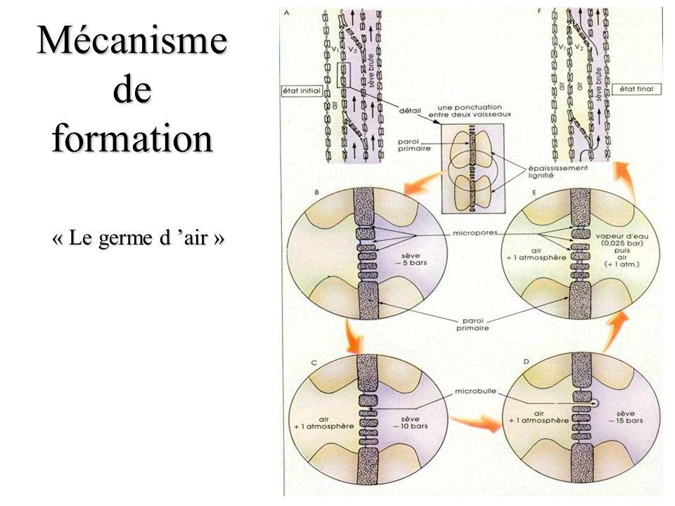 Mécanisme de formation « Le germe d air »