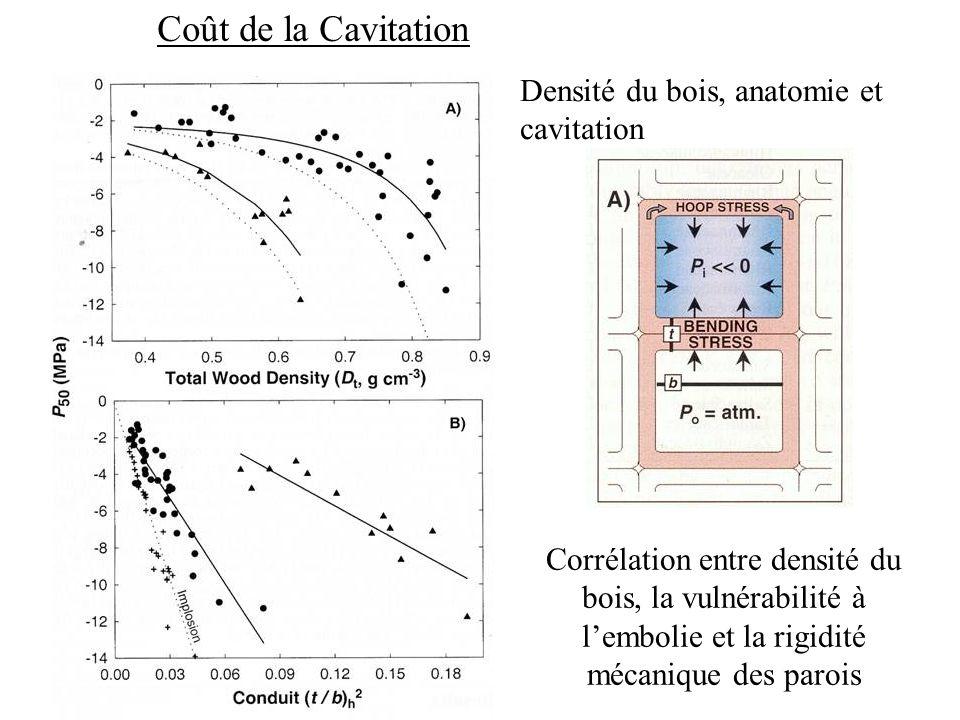 Coût de la Cavitation Densité du bois, anatomie et cavitation Corrélation entre densité du bois, la vulnérabilité à lembolie et la rigidité mécanique des parois