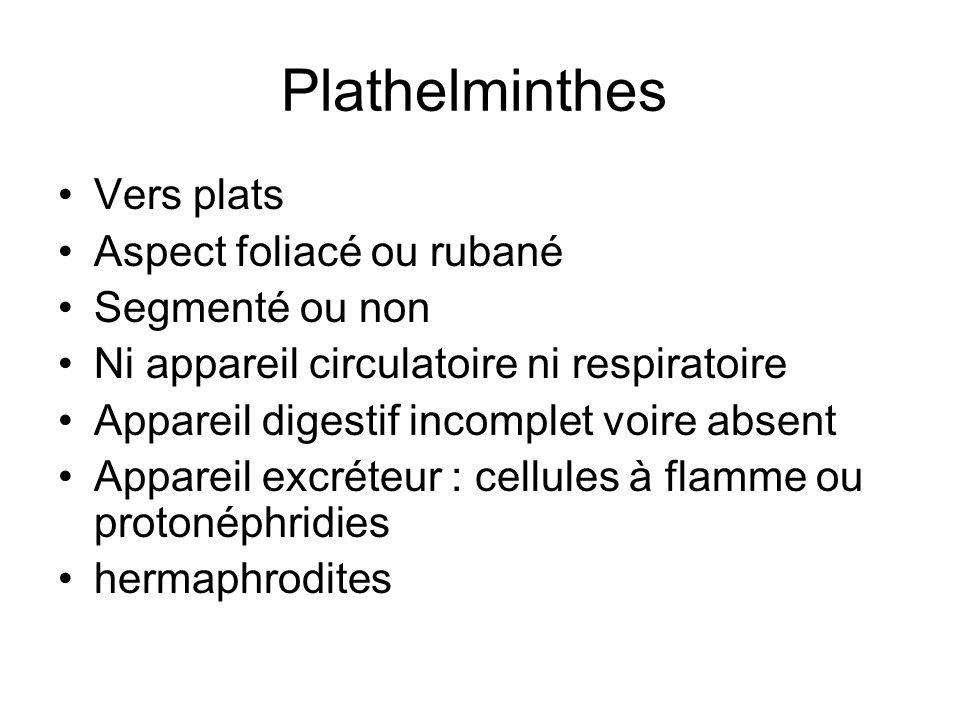 Plathelminthes Vers plats Aspect foliacé ou rubané Segmenté ou non Ni appareil circulatoire ni respiratoire Appareil digestif incomplet voire absent A
