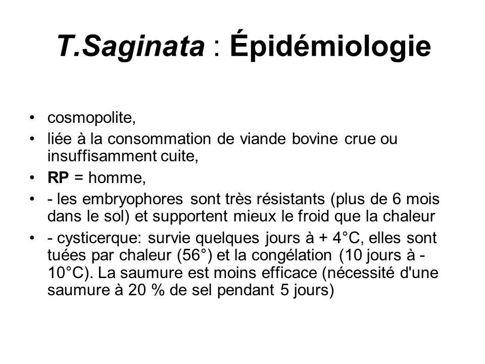T.Saginata : Épidémiologie cosmopolite, liée à la consommation de viande bovine crue ou insuffisamment cuite, RP = homme, - les embryophores sont très