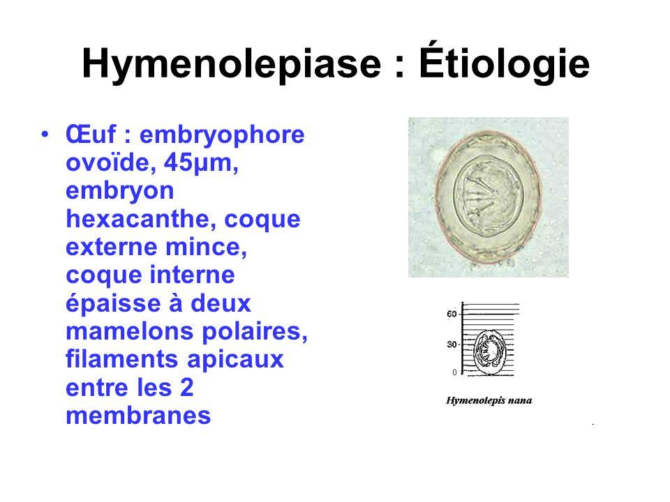 Hymenolepiase : Étiologie Œuf : embryophore ovoïde, 45μm, embryon hexacanthe, coque externe mince, coque interne épaisse à deux mamelons polaires, fil
