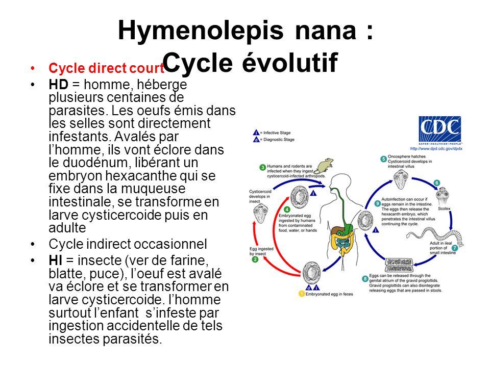 Hymenolepis nana : Cycle évolutif Cycle direct court HD = homme, héberge plusieurs centaines de parasites. Les oeufs émis dans les selles sont directe