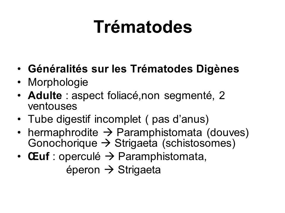 Trématodes Généralités sur les Trématodes Digènes Morphologie Adulte : aspect foliacé,non segmenté, 2 ventouses Tube digestif incomplet ( pas danus) h
