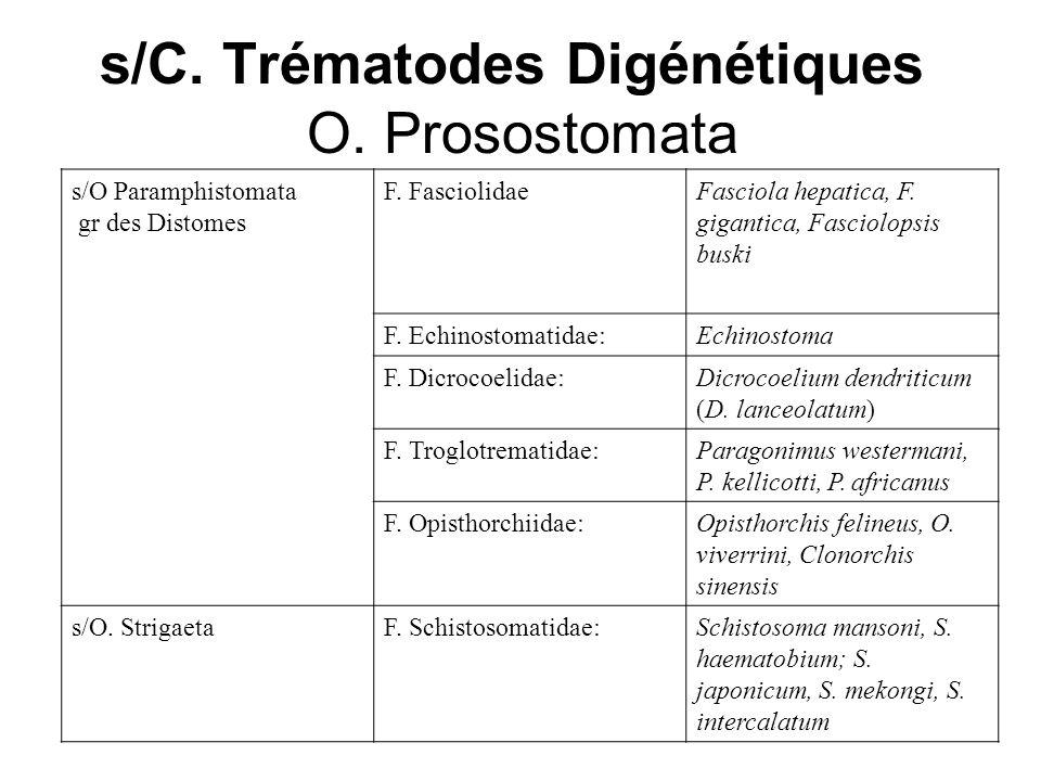 s/C. Trématodes Digénétiques O. Prosostomata Fasciola hepatica, F. gigantica, Fasciolopsis buski F. Fasciolidaes/O Paramphistomata gr des Distomes Ech