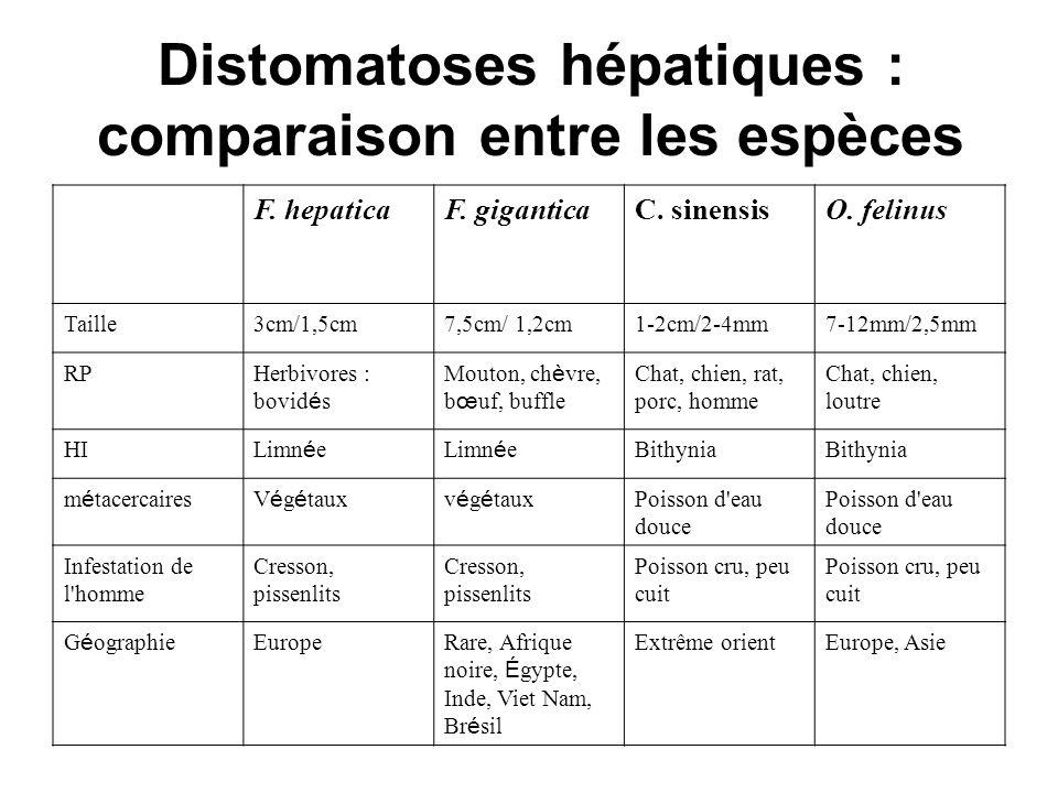 Distomatoses hépatiques : comparaison entre les espèces O. felinusC. sinensisF. giganticaF. hepatica 7-12mm/2,5mm1-2cm/2-4mm7,5cm/ 1,2cm3cm/1,5cmTaill