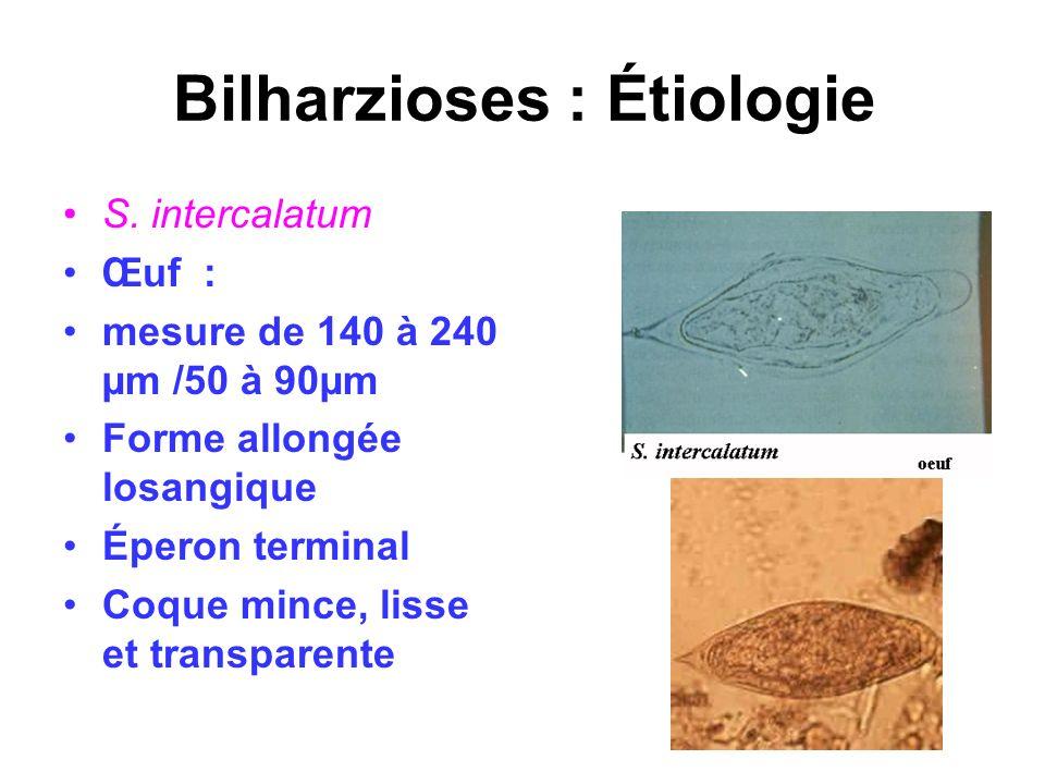 Bilharzioses : Étiologie S. intercalatum Œuf : mesure de 140 à 240 µm /50 à 90µm Forme allongée losangique Éperon terminal Coque mince, lisse et trans