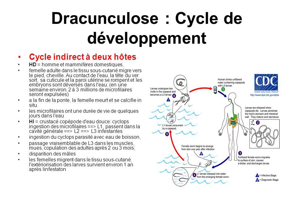 Dracunculose : Cycle de développement Cycle indirect à deux hôtes HD = homme et mammifères domestiques, femelle adulte dans le tissu sous-cutané migre