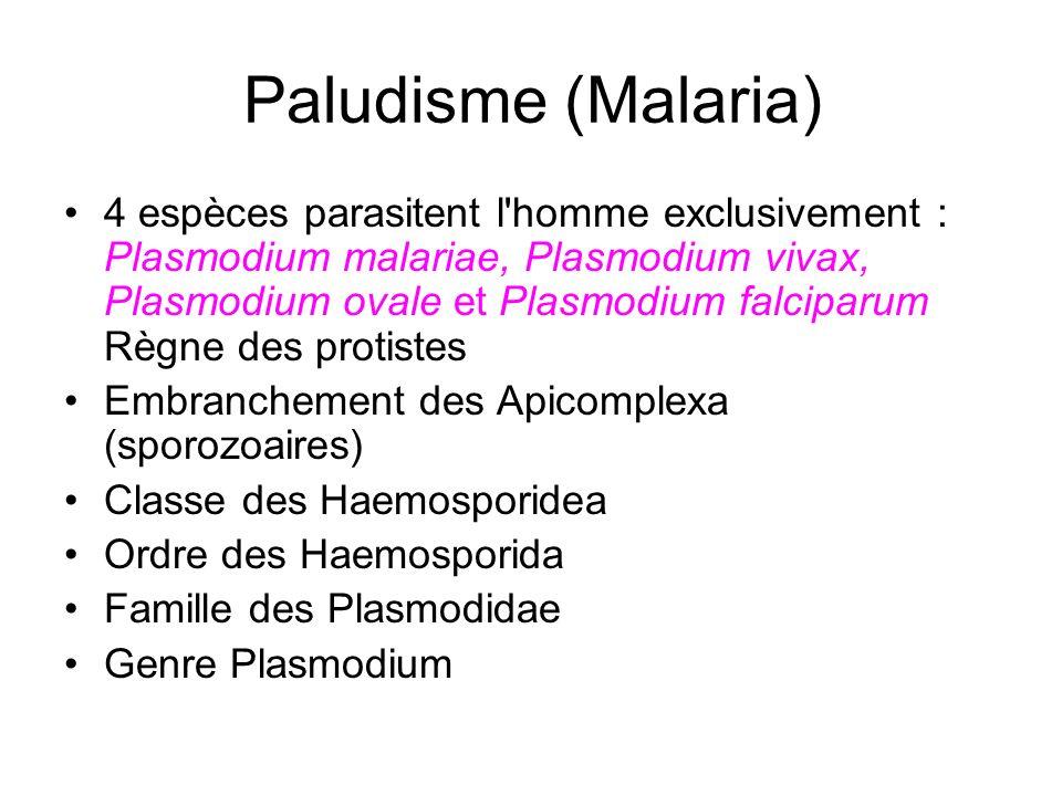 Paludisme (Malaria) 4 espèces parasitent l'homme exclusivement : Plasmodium malariae, Plasmodium vivax, Plasmodium ovale et Plasmodium falciparum Règn