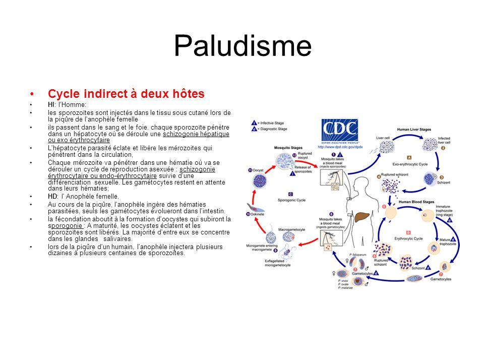 Paludisme Cycle indirect à deux hôtes HI: l'Homme: les sporozoïtes sont injectés dans le tissu sous cutané lors de la piqûre de l'anophèle femelle ils