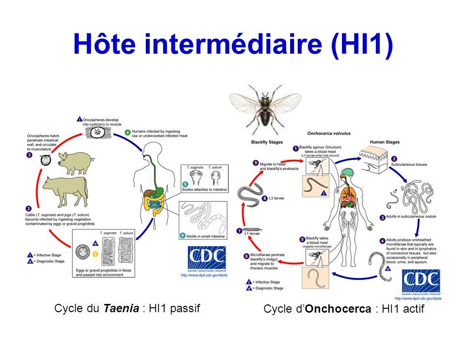 Hôte intermédiaire (HI1) Cycle du Taenia : HI1 passif Cycle dOnchocerca : HI1 actif