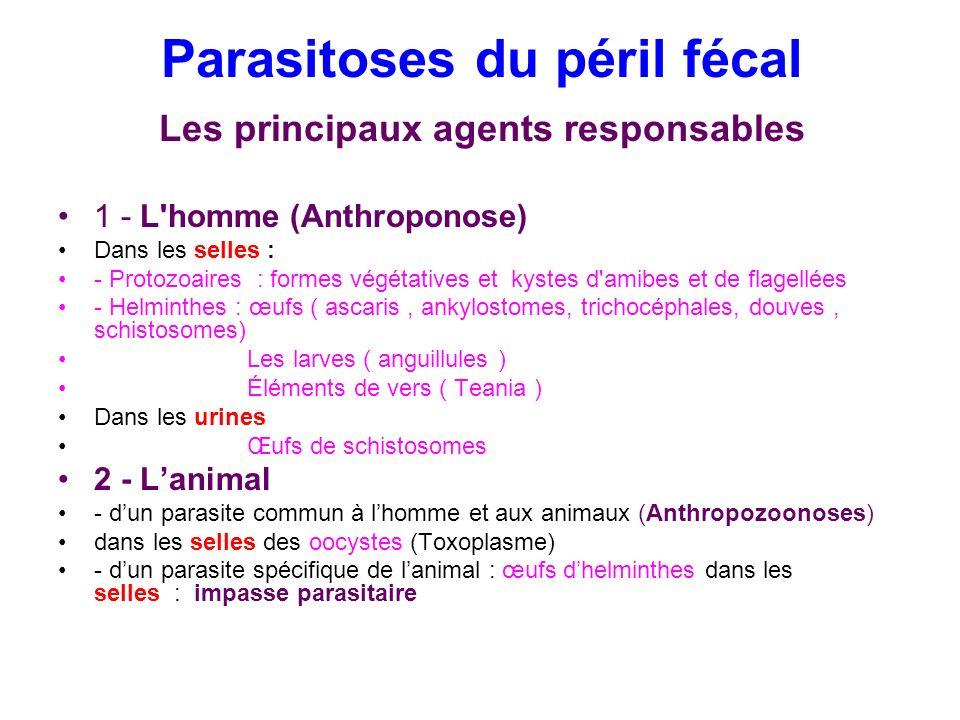 Parasitoses du péril fécal Les principaux agents responsables 1 - L'homme (Anthroponose) Dans les selles : - Protozoaires : formes végétatives et kyst