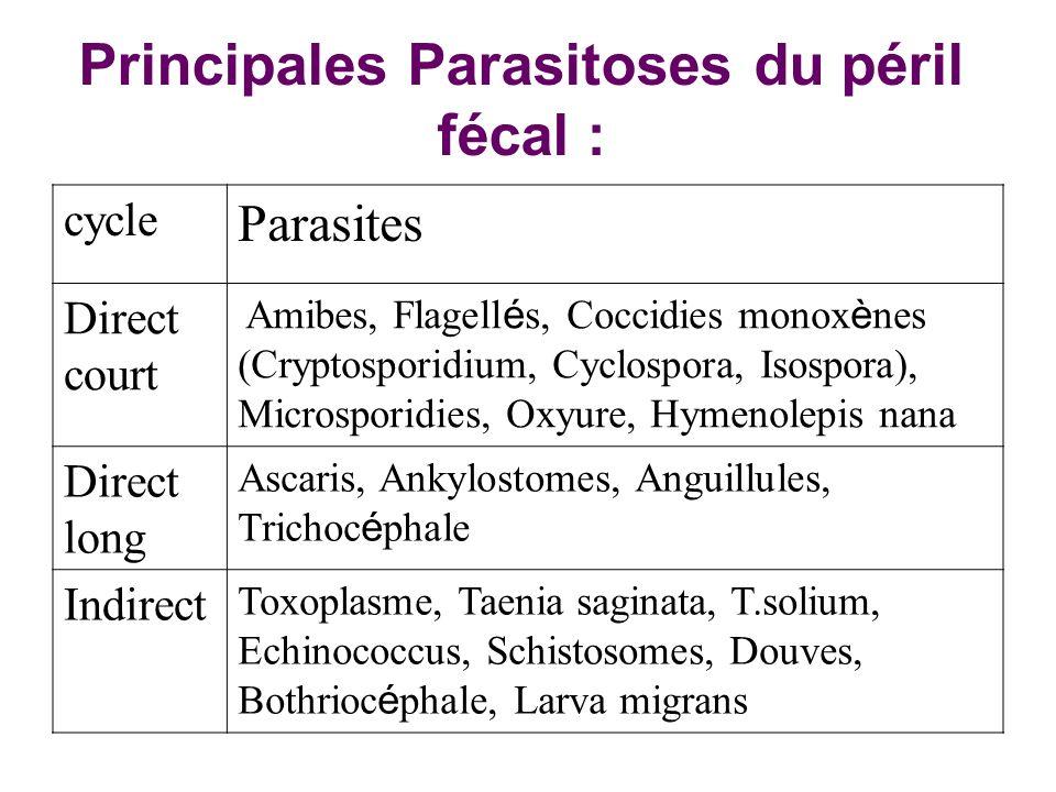 Principales Parasitoses du péril fécal : Parasites cycle Amibes, Flagell é s, Coccidies monox è nes (Cryptosporidium, Cyclospora, Isospora), Microspor