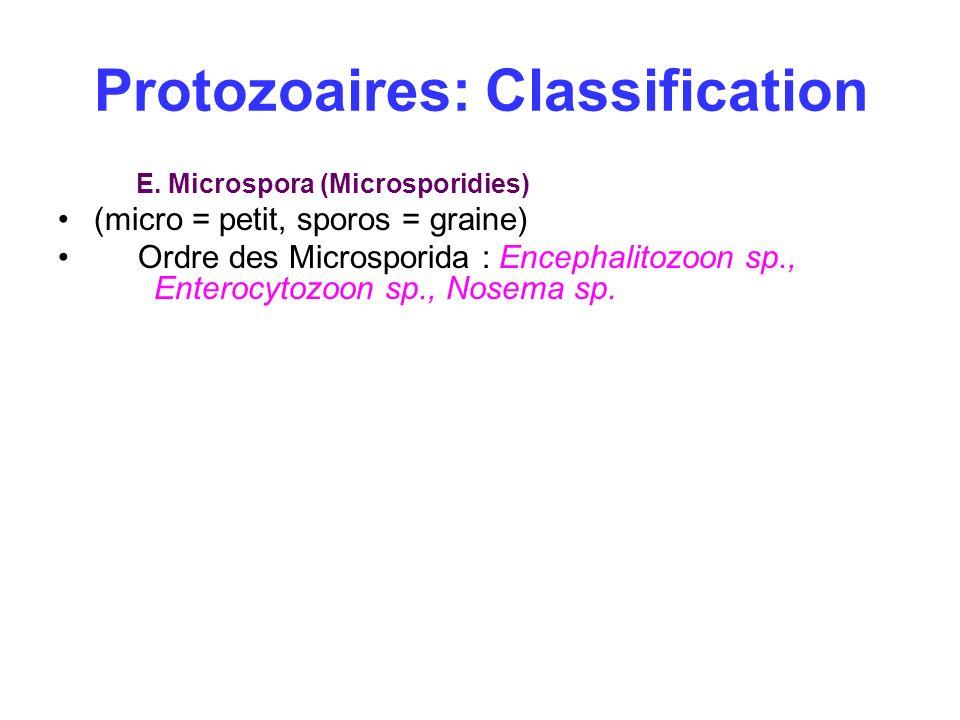 Protozoaires: Classification E. Microspora (Microsporidies) (micro = petit, sporos = graine) Ordre des Microsporida : Encephalitozoon sp., Enterocytoz