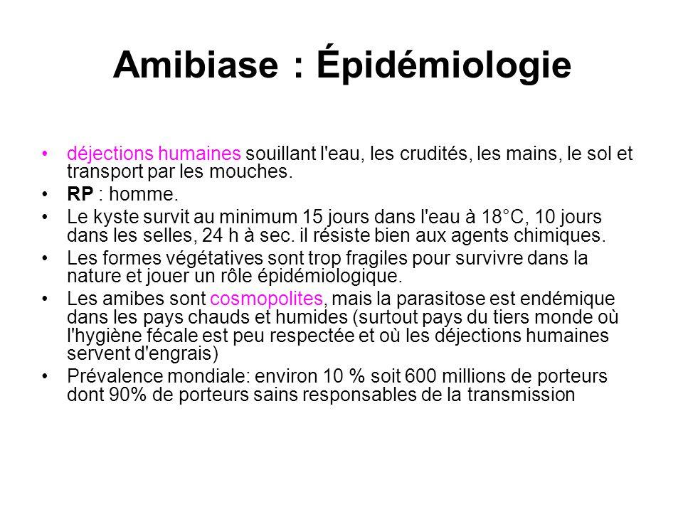 Amibiase : Épidémiologie déjections humaines souillant l'eau, les crudités, les mains, le sol et transport par les mouches. RP : homme. Le kyste survi