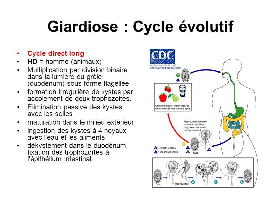 Giardiose : Cycle évolutif Cycle direct long HD = homme (animaux) Multiplication par division binaire dans la lumière du grêle (duodénum) sous forme f