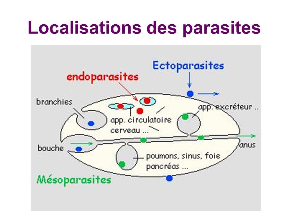 Localisations des parasites