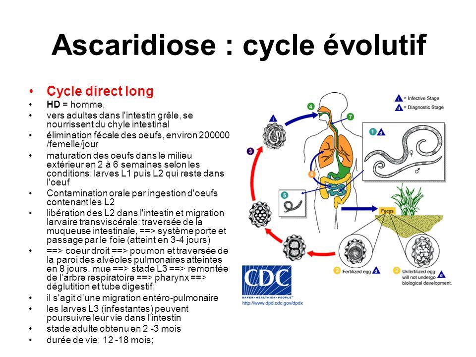 Ascaridiose : cycle évolutif Cycle direct long HD = homme, vers adultes dans l'intestin grêle, se nourrissent du chyle intestinal élimination fécale d