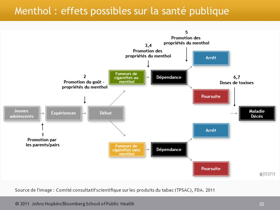 2011 Johns Hopkins Bloomberg School of Public Health Menthol : effets possibles sur la santé publique Source de l'image : Comité consultatif scientifi