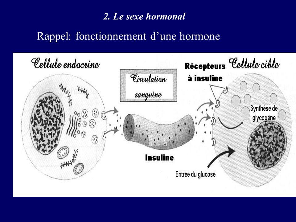 2. Le sexe hormonal Rappel: fonctionnement dune hormone