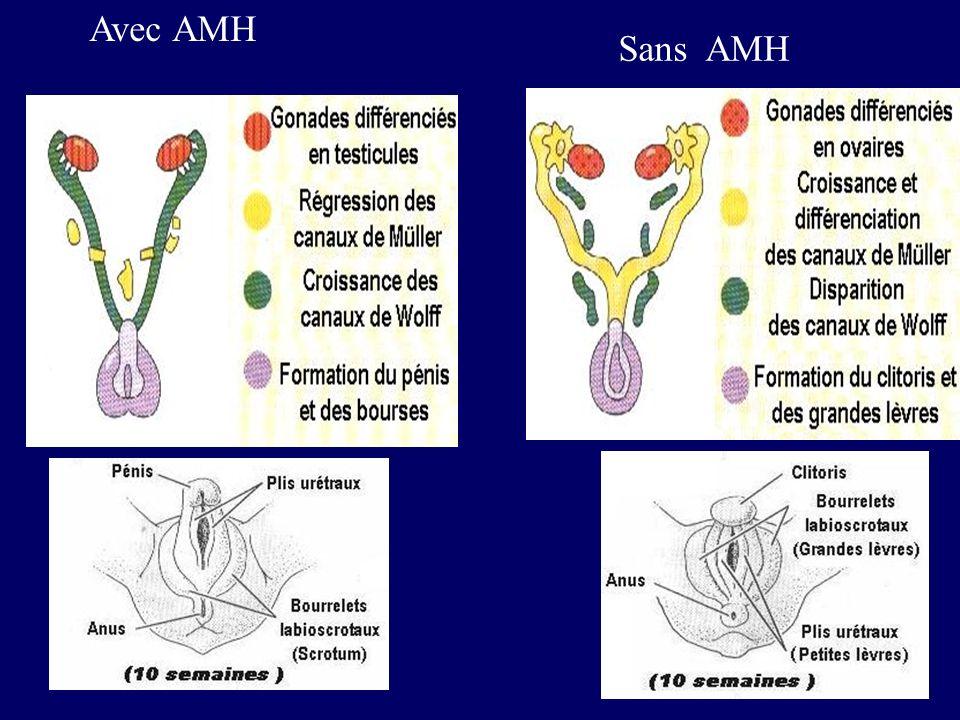 Avec AMH Sans AMH