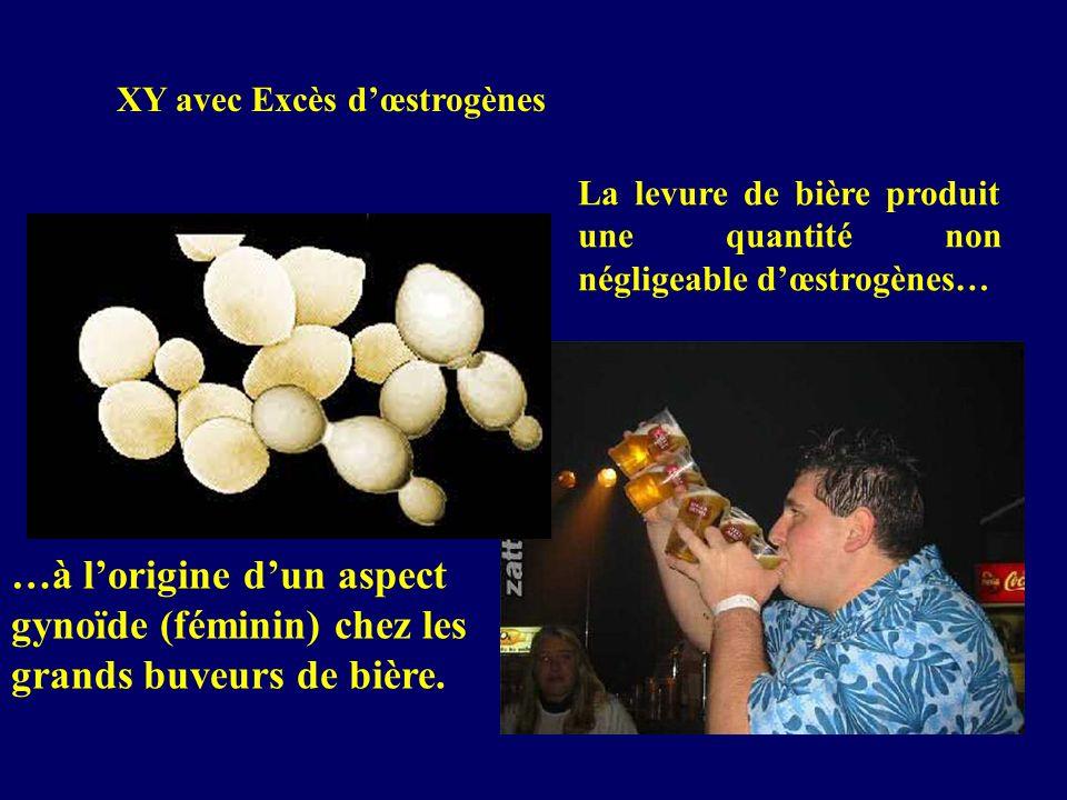 XY avec Excès dœstrogènes La levure de bière produit une quantité non négligeable dœstrogènes… …à lorigine dun aspect gynoïde (féminin) chez les grand